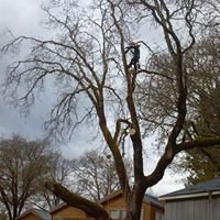 Quality Tree Service & Affordable Lawn Care