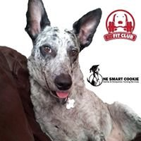 One Smart Cookie Canine & Companion Training Services