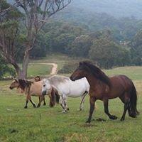 Rosemarkie Highland Ponies