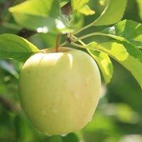 Windy Ridge Orchards