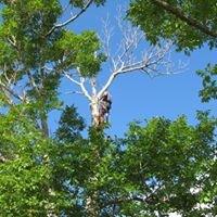 Grady's Tree Care