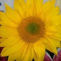 Susie's Medford Flower shop