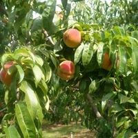 Seasons best produce
