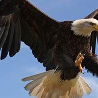 Eagle Hydraulics