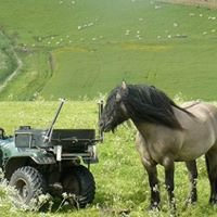 Achnacarry Highland Ponies