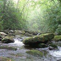 Citico Creek Wilderness