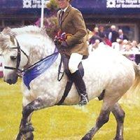 Ballinton Dene Highland Ponies