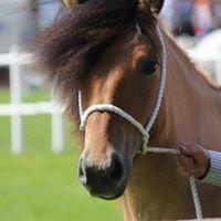 Fourmerk Highland Ponies