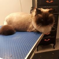 Liza's Grooming Boutique