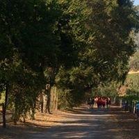 Hoot Owl Creek Vineyards-Alexander Valley Vineyards