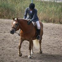 Golden Pony Equestrian