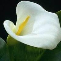 Calla floral & confections +