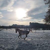 Pferde, Reiten und Wohlfühlen in Siferling