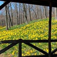 Meriden Daffodil Festival