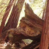 Big Basin Redwood State Park