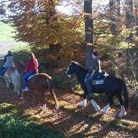 Ferien und Naturhof W & W western und wanderreiten