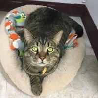 Pittsboro Veterinary Clinic