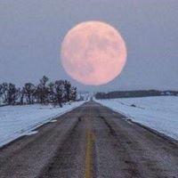 MoonLite Auto Transport