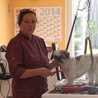 Biggi's Hundesalon und Hunde Friseur Schule