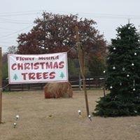 Flower Mound Christmas Trees