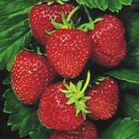 Langdon Farms Fresh Strawberries and Produce