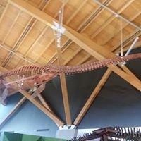 P.J. Currie Dinosaur Museum, Grande Prairie