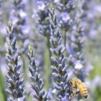 Van Hevelingen Herb Nursery