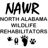North Alabama Wildlife Rehabilitators