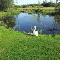 Mountbellew Junior Golf