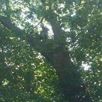 Custom Landscape Solutions & Tree Service Inc.