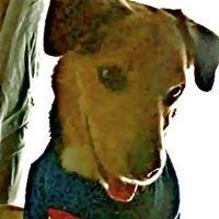Carolyn's Pampered Pets LLC