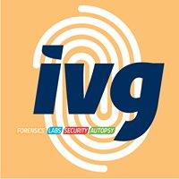 IVG Comercializadora