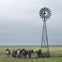 RO Quarter Horses