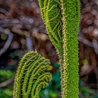 Glengorm Gardens Landscaping