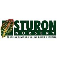 Sturon Nursery