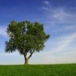 LE Savory Tree & Lawn Service, Inc