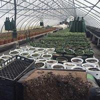 Lamoy Produce & Greenhouse