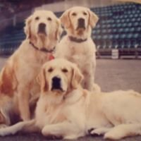 West Wishaw dog training club