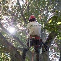 Regal Tree & Shrub Experts, LLC