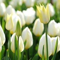Catanese Anna Flower Shop/Resh 717 148-1828 400