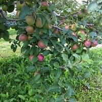Pie Tree Orchard
