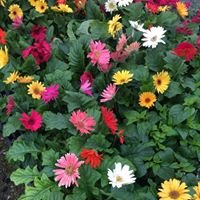 Sherwood Forest Landscaping & Garden Center