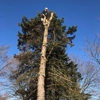 Pittock's Tree and Landscape LLC