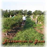 Cline Berry Farm