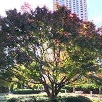Downey Trees Inc