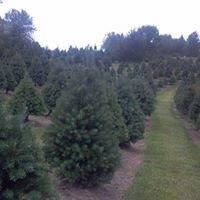 Hackert Tree Farm