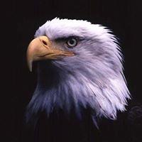 Fraternal Order Of Eagles Aerie 2427