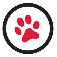 Markham Cat Adoption & Education Centre