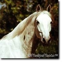 Chestnut Ridge Equestrian Center