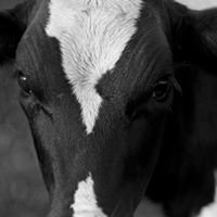 Missouri Dairy Farmers